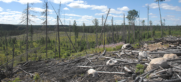 northern ontario logging environmental uncertainty