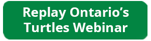 replay Ontario's turtles webinar